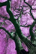 1089466_plane_tree